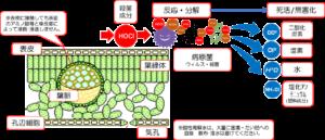 農業用酸性電解水 殺菌/ 葉面散布モデル