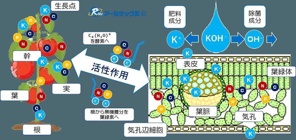 農業用アルカリ性電解水活力活性葉面散布モデル